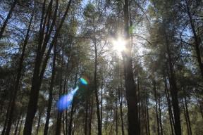 IMG_6500 (קרן שמש ביער)