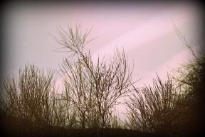 IMG_6776 (חוף פלמחים)