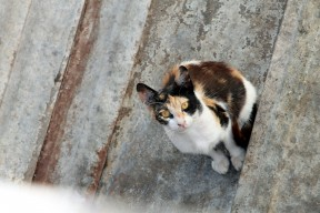 IMG_8504 (חתולי רחוב בתל אביב)