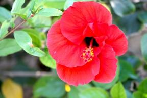 IMG_9047 (פרחים)