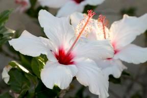 IMG_9048 (פרחים)